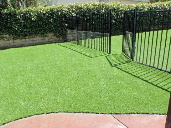 Artificial Grass Photos: Grass Turf Carefree, Arizona Dog Running, Front Yard Ideas
