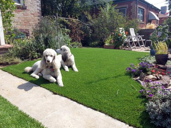 Artificial Grass Photos: Synthetic Turf Strawberry, Arizona Dog Running, Dogs Runs