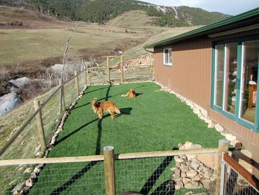 Artificial Grass Photos: Turf Grass San Miguel, Arizona Lawn And Landscape, Backyard Landscaping